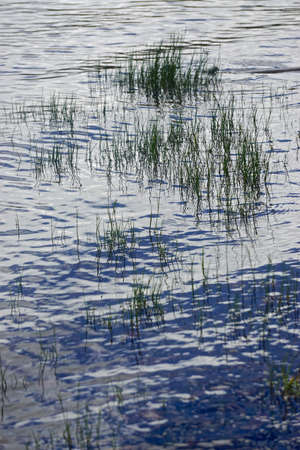 Blades of grass and their reflections make interesting patterns in rippling water at the edge of a lake.