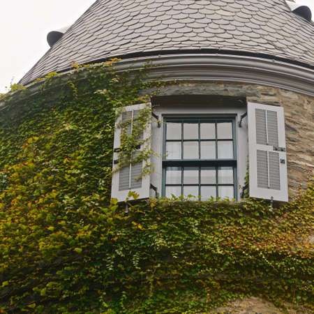 Milford, Pennsylvania: English ivy (Hedera helix) climbs a weathered stone wall at Grey Towers (1886), the former home of Gifford Pinchot, the first Chief of the US Forestry Service.