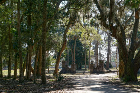 Cumberland Island, Georgia, USA: The grounds of Dungeness, a ruined mansion amid Southern live oaks - Quercus virginiana - draped with Spanish moss - Tillandsia usneoides.