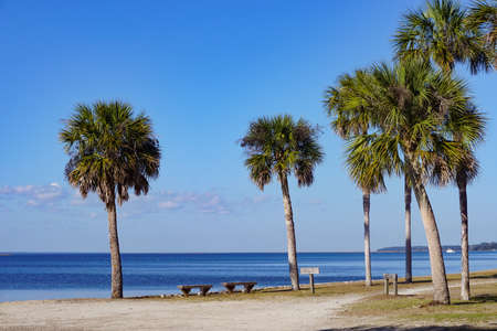 Cumberland Island, Georgia, USA: Palm trees and benches on the shore.