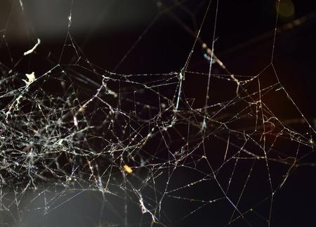 arachnids: Abstract white Spiderweb on the black background