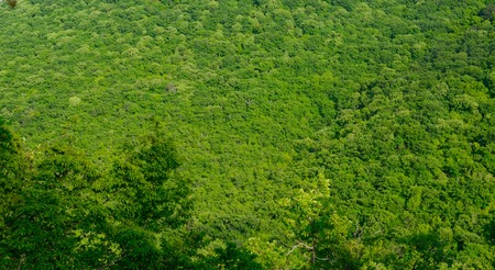 panorama view: Beautiful view of a green forest in the mountains