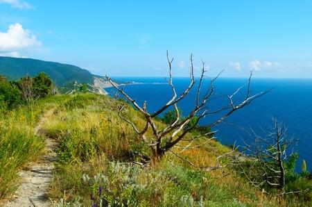 albero secco: Albero secco su uno sfondo di montagne boscose e il mare