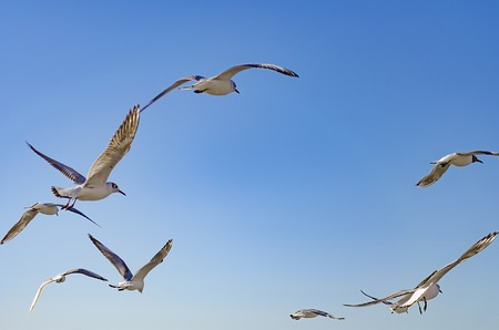 Seagulls fly over the Black sea against the blue sky.