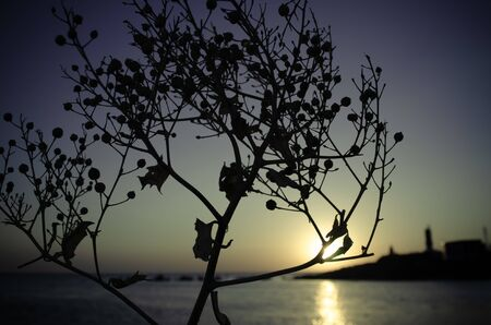 Silhouette of a plant at sunset. Russia