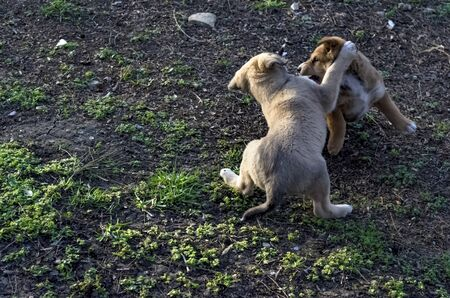 Two homeless puppies play in a clearing on the spring grass.