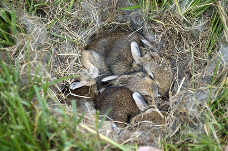 Bunny Nest In The Grass