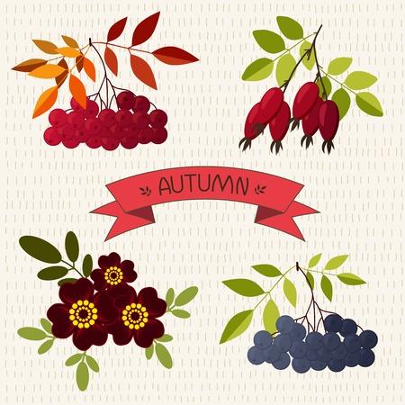 chokeberry: Autumn. Mountain ash, chokeberry, rose, marigold  on the hand drawn background