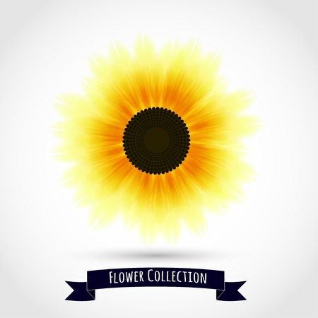 sunflower isolated: Colorful sunflower isolated on white. Vector illustration