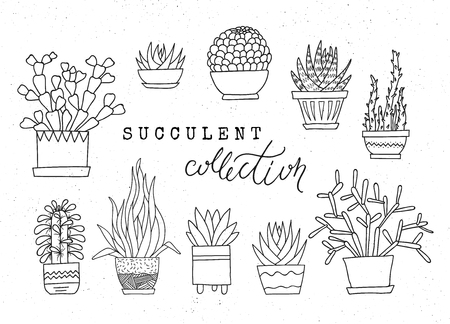 Decorative potted succulents. Vector set of hand-drawn sketched elements