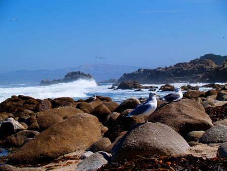 A pair of seagulls sunning on the rocks with waves crashing behind them.     Stock Photo - 4203581