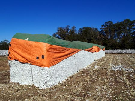 Cotton Modules with a cotton field in the background.     photo