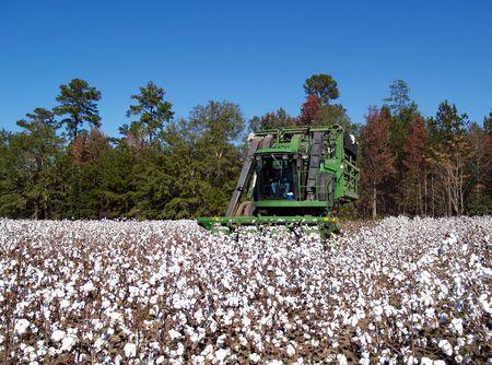 Farmer raccolta del cotone con una raccoglitrice di cotone. Archivio Fotografico