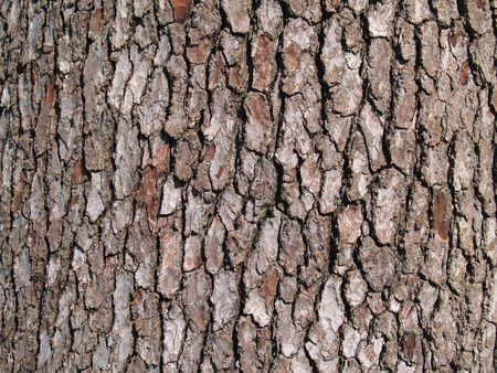 Detalle de la corteza de un tronco de árbol. Foto de archivo - 4424903