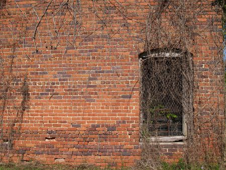 Old historic weathered red brick wall with dead vines and a barred window.      photo