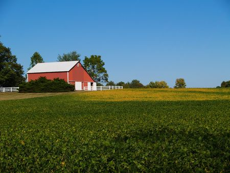 Ripening soybean field in front of red barn beneath a clear blue sky. Stockfoto