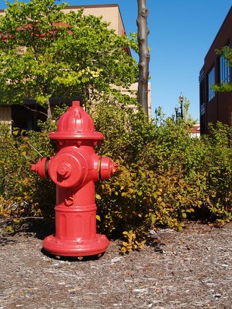 bush fire: Red fire hydrant on bark ground cover, next to a shopping center in front of a bush that is starting to show fall colors.