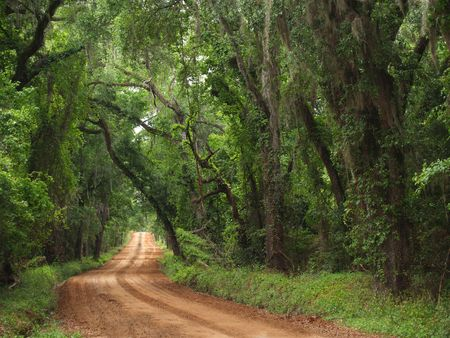 Red clay plantation country road lined with a canopy of trees and Spanish moss including live oaks in the south Georgia, north Florida area during late spring or early summer time.