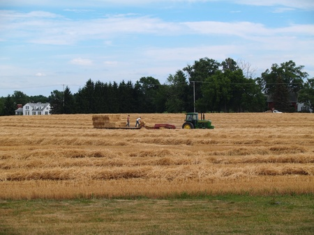 Tractor and baler working in a field of freshly cut wheat straw piled in rows ready to bale. Stock Photo - 10035947