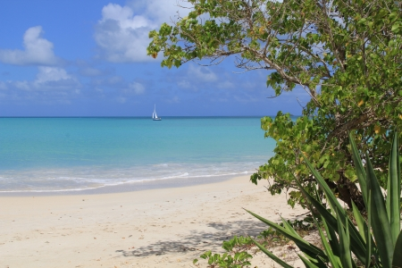 antigua: Sailboat on the Tranquil aqua Caribbean Sea as seen from a beach with an agave plant. Stock Photo