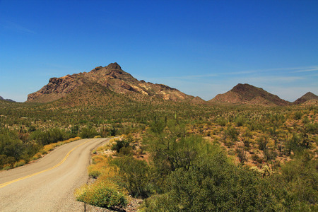 cholla: Blue sky copy space and winding road near Pinkley Peak in Organ Pipe Cactus National Monument in Ajo, Arizona, USA including a large assortment of desert plants, which is a short drive west of Tucson.