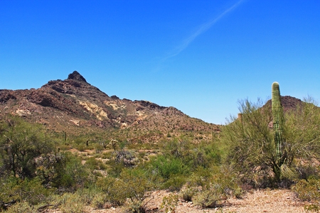creosote: Blue sky copy space near Pinkley Peak in Organ Pipe Cactus National Monument in Ajo, Arizona, USA including a large assortment of desert plants, which is a short drive west of Tucson. Stock Photo