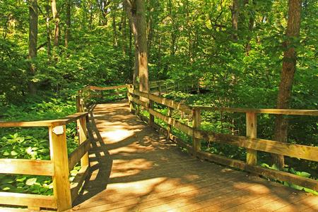 Peaceful boardwalk trail through lush trees in the Fontenelle Forest Nature Center in Bellevue, Nebraska near Omaha.