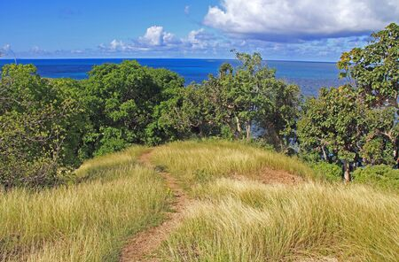 Walking trail between poisonous manchineel trees, 5 Islands Peninsula, Old Fort Barrington, between Deep Bay and St. John's Harbour, Antigua Barbuda Lesser Antilles, West Indies, Caribbean, Goat Hill.