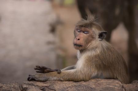 quizzical: Retrato lateral del mono lindo Foto de archivo