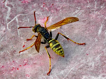 New hatch wasp
