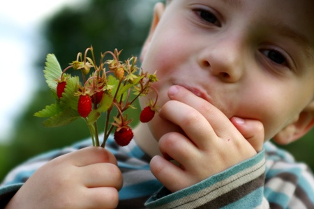 licking finger: Child eating delicious strawberries
