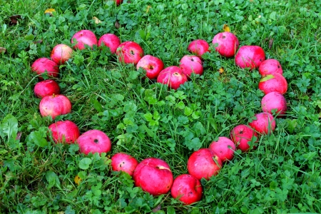 apple heart Stock Photo - 13612902
