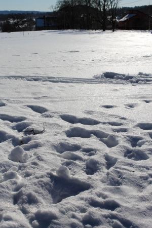 snow crust photo