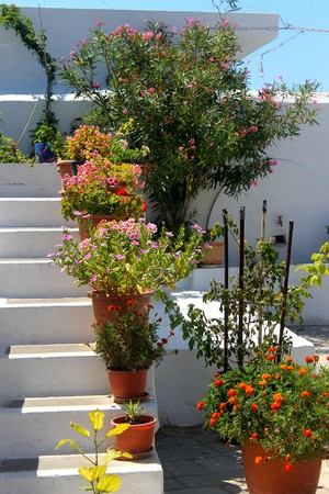 whitewashed: Flower pots on whitewashed steps