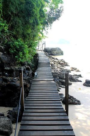 tropical path way Фото со стока