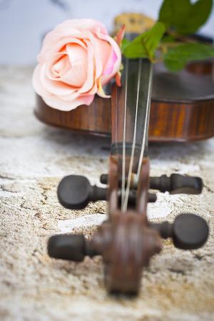 Violin and pink rose