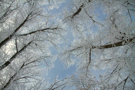 Trees in the winter snowy forest Stock Photo - 18038520