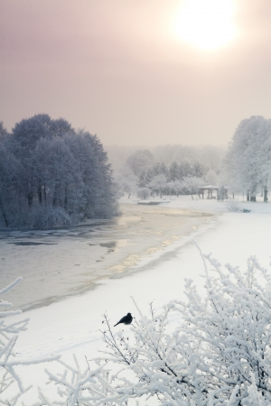 winter landscape of the park   photo