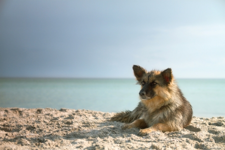 dog on the beach bathed in the sea and sunbathe on the beach Stock Photo