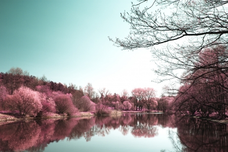 Photo of summer landscape shot in the IR spectrum photo