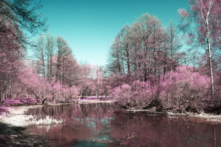 Photo of summer landscape shot in the IR spectrum Stock Photo
