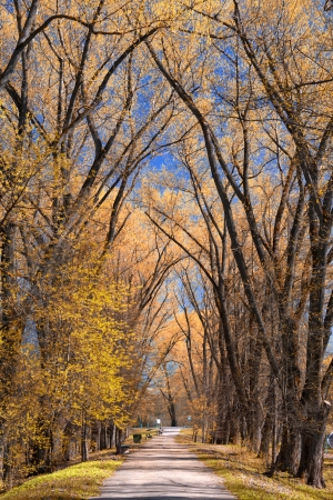 willow tree: sky could be seen through the trees of the park Stock Photo