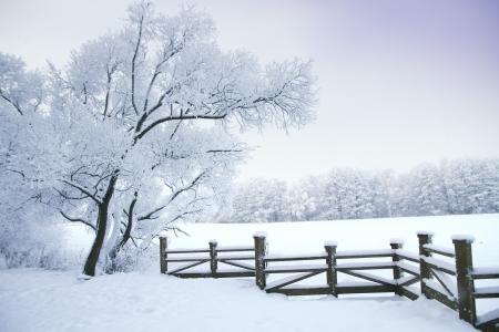 Cuento de invierno Foto de archivo - 21668205