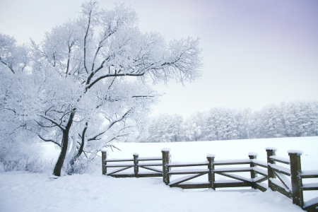 rural scenes: Winters Tale Stock Photo