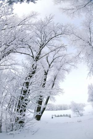 sleet: Winters Tale.