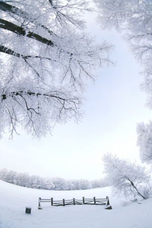 Winter's Tale. fisheye photo