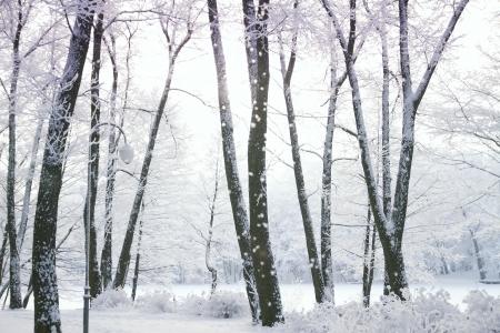 winter's tale: Winters Tale Stock Photo