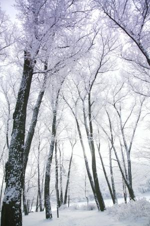 winters: Winters Tale Stock Photo