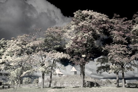 infrared Photography photo