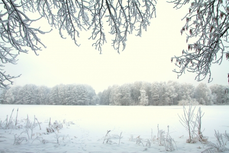 the trees covered with snow: Snowy winter forest fairy Stock Photo